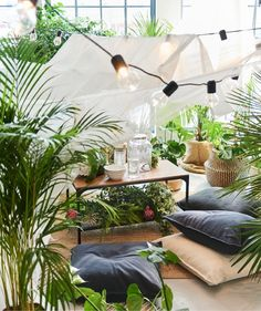 IKEA - DYPSIS LUTESCENS, Potted plant, Areca palm, Decorate your home with plants combined with a plant pot to suit your style. Ikea France, Indoor Picnic, Ikea Living Room, Decoration Plante, Palm Plant, Office Plants, Home And Deco, Potted Plants, Airstream