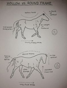 THE HOLLOW VS. ROUND FRAME- yep...definitely need to work with my horse on this!