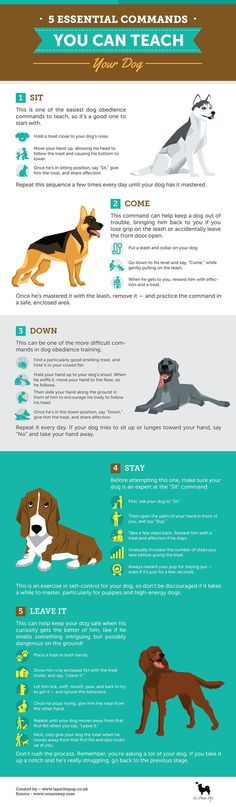 Teaching your dog is about building your relationship with your pet dog as well as establishing boundaries. Be firm but consistent and you will notice impressive results when it comes to your dog training efforts. Puppy Care, Dog Care, Dog Facts, Dog Language, Training Your Dog, Training Tips, Service Dogs, Dog Behavior, New Puppy