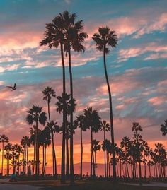 Venice California by Scott Lipps | California Feelings