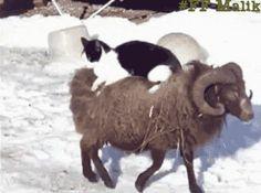 funny cat gif. more here http://artonsun.blogspot.com/2015/04/funny-cat-gif-more-here_93.html