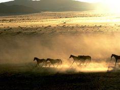 La passeggiata al tramonto degli stalloni di Aus | , emozioni allo stato brado http://www.viaggidellelefante.it/africa/namibia/