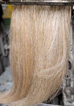 Hackled flax fibre
