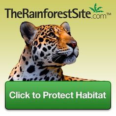 Click To Give @ The Rainforest Site--it's free (sponsers donate with each click) and it helps!