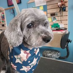 Pepper #wagsmytail #tucsondoggrooming #seniorpet #olddogsrule A well groomed dog is a well loved dog! Call us today to schedule your dog grooming appointment 520-744-7040