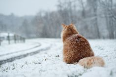 Ginger kitties... and snow.