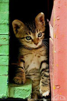Sweet Kitty ❤