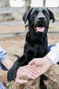 How we met - Our story and the engagement ⋆ KING KIMBERLY dog engagement photos Dog Engagement Pictures, Engagement Photo Outfits, Engagement Photo Inspiration, Engagement Couple, Wedding Engagement, Engagement Ideas, Dog Wedding, Dream Wedding, Wedding Rings