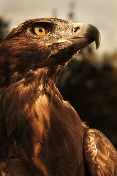 Eagle Study Photo by Michael Andrews