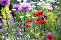 No Cost Flower Gardens