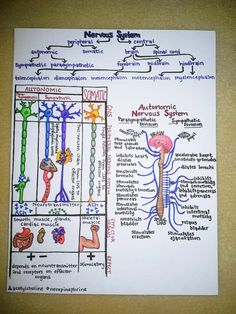 Perhaps when I graduate I should sell my notes too... Laminated hand-drawn human anatomy study diagrams. $45.00, via Etsy.