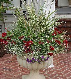 Flowering container garden with summer blooms.