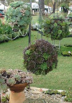 Succulent Balls...9 Simple and Practical Ideas for the Garden | Like It Short #Kokedamascolgantes Love Garden, Summer Garden, Garden Ideas, Hanging Succulents, Cactus, Balls, Bloom, Gardening, Gardens