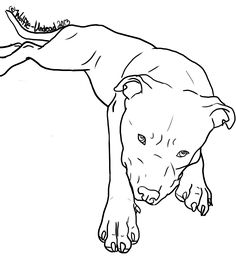 Pit Bull Puppy Coloring Page  Crayon Action Coloring Pages Find