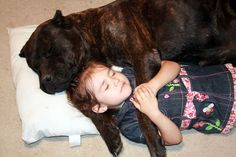 """Cane Corso """"Chaos"""" (About Time's Causing Chaos) napping with her little girl, Hope. This is the temperament I LOVE about this breed!"""