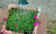 How, When and Where to Water Potted Plants | Care2 Healthy Living