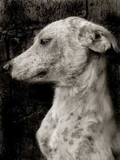 Traer Scott's Images of Street Dogs - My Modern Metropolis