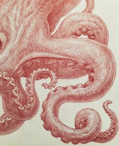 Guno Park - octopus study - red pen