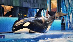 Trua goes for a slide at @SeaWorld Orlando!