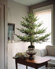 how to trim a tree