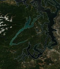 Just like in late July 2016, the waters of the Hood Canal are turning a brilliant blue, causing many residents and visitors to wonder what had happened to the usually dark waters of Washington Stat…