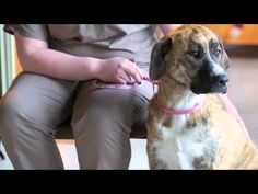 Orapup | Beat Bad Dog Breath Without a Toothbrush
