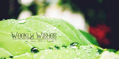 Weekly-Wishes-21 My Brain, Dream Catcher, Wish, Blog, Dreamcatchers, Blogging, Dream Catchers