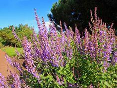 Menopauza - overené recepty našich predkov Nasa, Plants, Flora, Plant, Planting