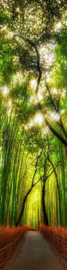 tall bamboo forest ~ There is a bamboo forest on Maui, on the Hana side of the island near the Seven Sacred Pools. It is probably one of the most beautiful, peaceful and calming places I have ever been.