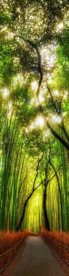 tall bamboo forest.piękne prawda?