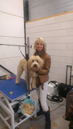 Would you like to learn to groom your Labradoodle yourself and never have to deal with tangles and mats again? Start TODAY with this FREE mini grooming course