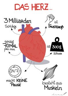 Family Guy Cartoon, Study Biology, Human Body Organs, Medicine Student, Study Organization, Pediatric Nursing, Learn German, Medical Illustration, Good Notes