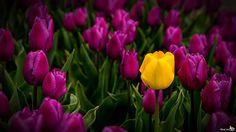 Purple and Yellow by Bram van Broekhoven