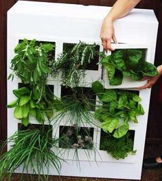 Let Your Green Thumb Flourish Even In The Smallest Spaces How to Create Unique DIY Small Space Indoor Gardens Vertikal Garden, Grow Your Own Food, Grow Food, Organic Gardening, Indoor Gardening, Urban Gardening, Hydroponic Gardening, Urban Farming, Aquaponics
