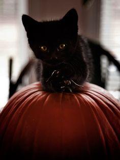 Sweet kitty on pumpkin