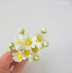 Little sugar daisies by Petalsweet.