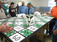 Bunny bingo, place your rabbits on the table, if he or she poop on your square you win. Great for 4H or FFA