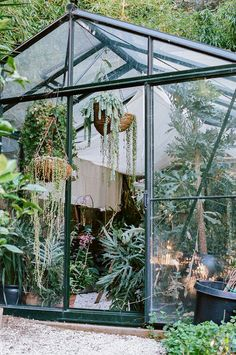 the perfect greehouse with hanging plants