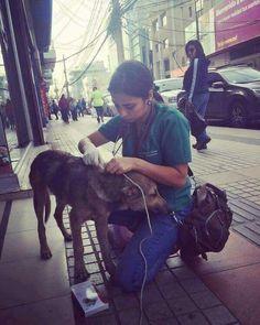 Veterinária atende animais abandonados que vivem na rua.  Ela diz que não faz nada demais: atendo a domicílio, se a casa deles é a rua, então vou atendê-los aqui. Essa tem nosso respeito e admiração. 👋👋