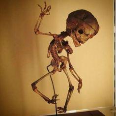 Bailando esqueleto fetal (museo de anatomía de Bolonia) #dancing #skeleton #fetal #fetus #Anatomy #pose #preparaat #skull #macabre #wunderkammer #cabinetofcuriosities #bologna #italia #italy #university