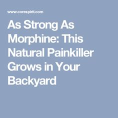 As Strong As Morphine: This Natural Painkiller Grows in Your Backyard