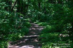 Forest path in Kyiv, Ukraine