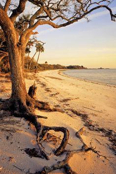Beautiful Beach in Cedar Key Florida