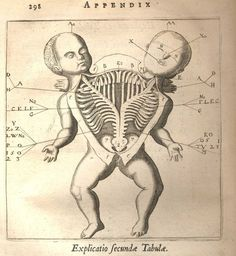 A is for Antique Anatomy