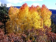 Fall Foliage in Pagosa Springs, CO