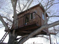 Tree House Plans   ... to build houses howhowever if i was atreehouse tree house play house