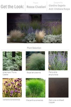 Get the Look: Rocca Civalieri, Thinking Outside the Boxwood. Already pinned top photo, but this shows plants used.