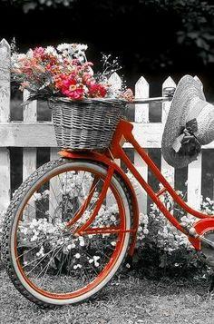 "Képtalálat a következőre: ""black and white pictures with a splash"" Bicycle Decor, Bicycle Basket, Old Bicycle, Bicycle Art, Bike Baskets, Color Splash, Color Pop, Colour, Bike Planter"