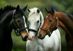 I love horses!  Always wanted one, but never fortunate enough to realize that dream.