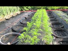 Four-Day Carrots (Part 1) - YouTube- Herrick Kimball is a great American inventor and a hard working dude!!